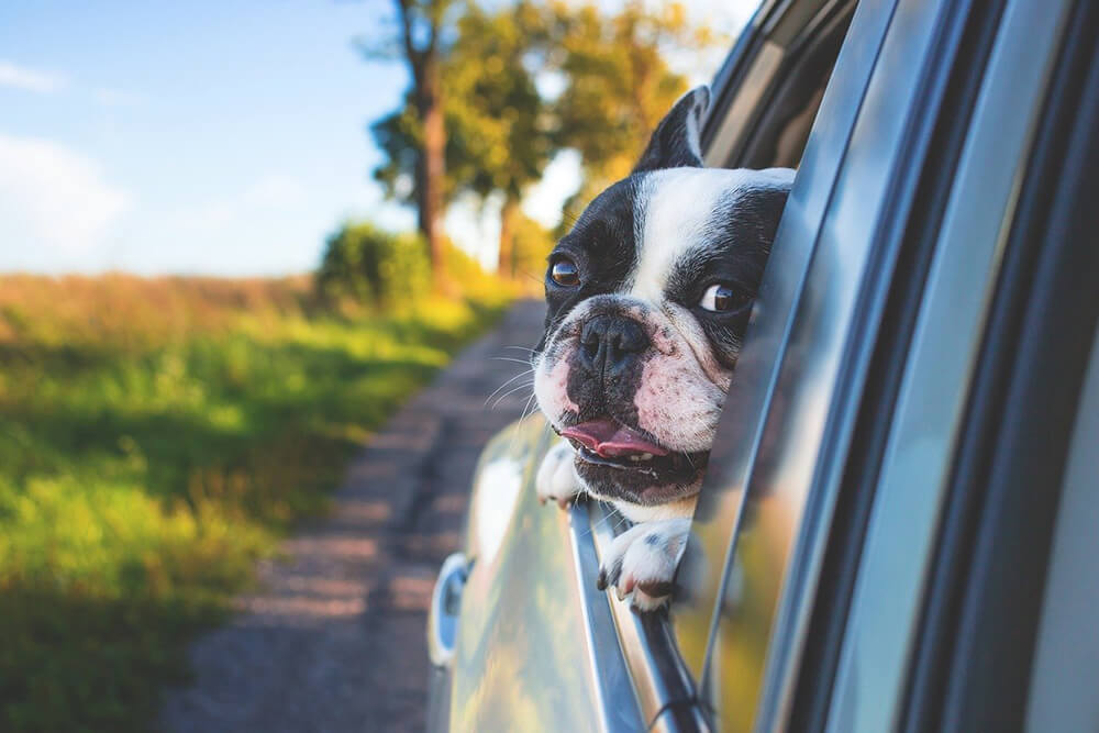 Protect Your Pet & Upholstery While Driving